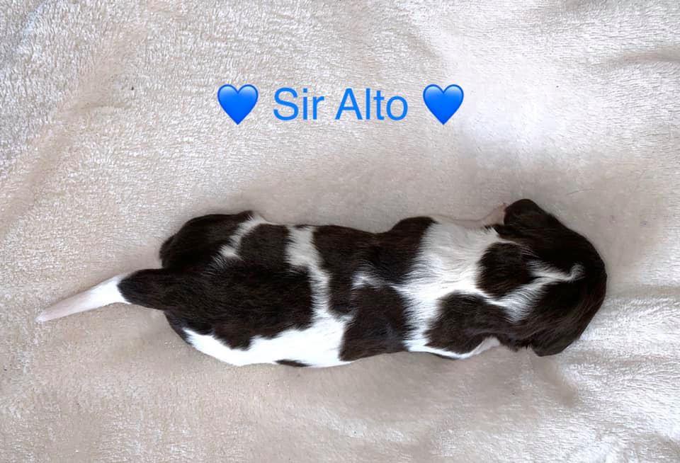 SirAlto