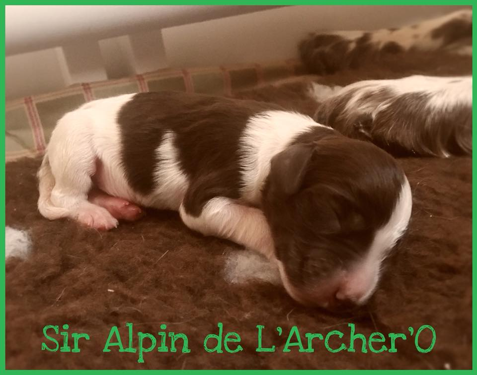 Sir Alpin de L'Archer'O