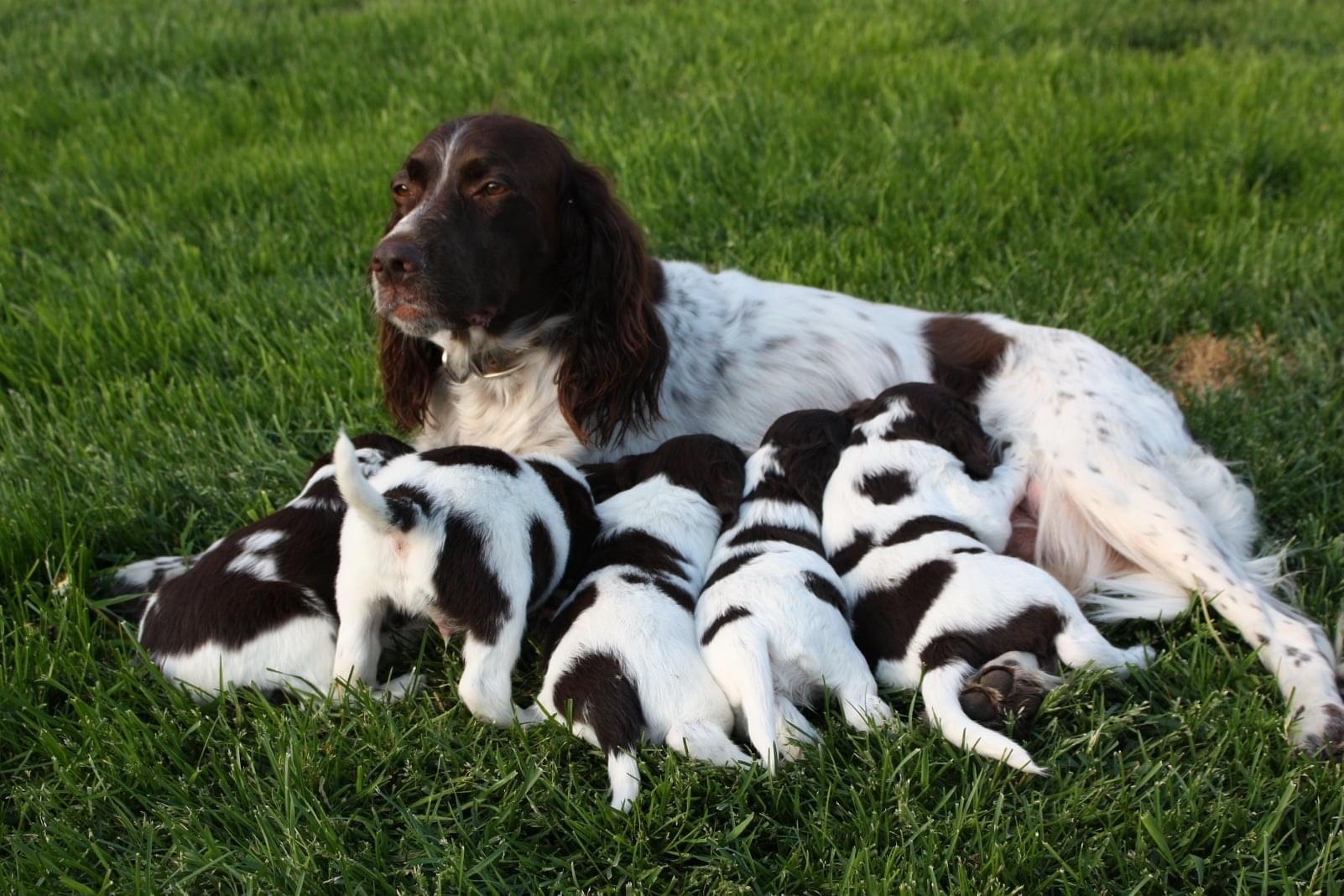 Meya et ses petits