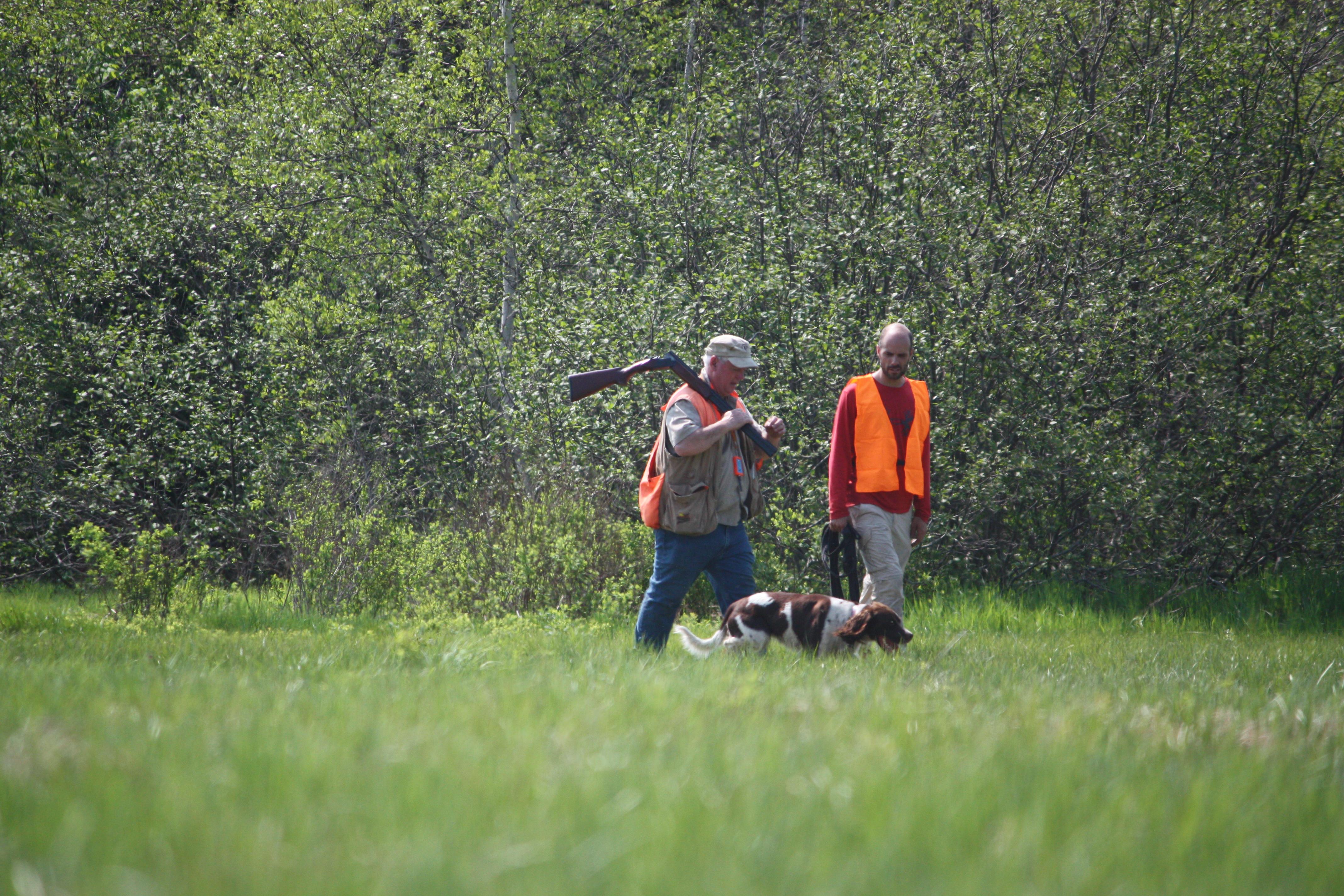 L'epagneul francais et la chasse