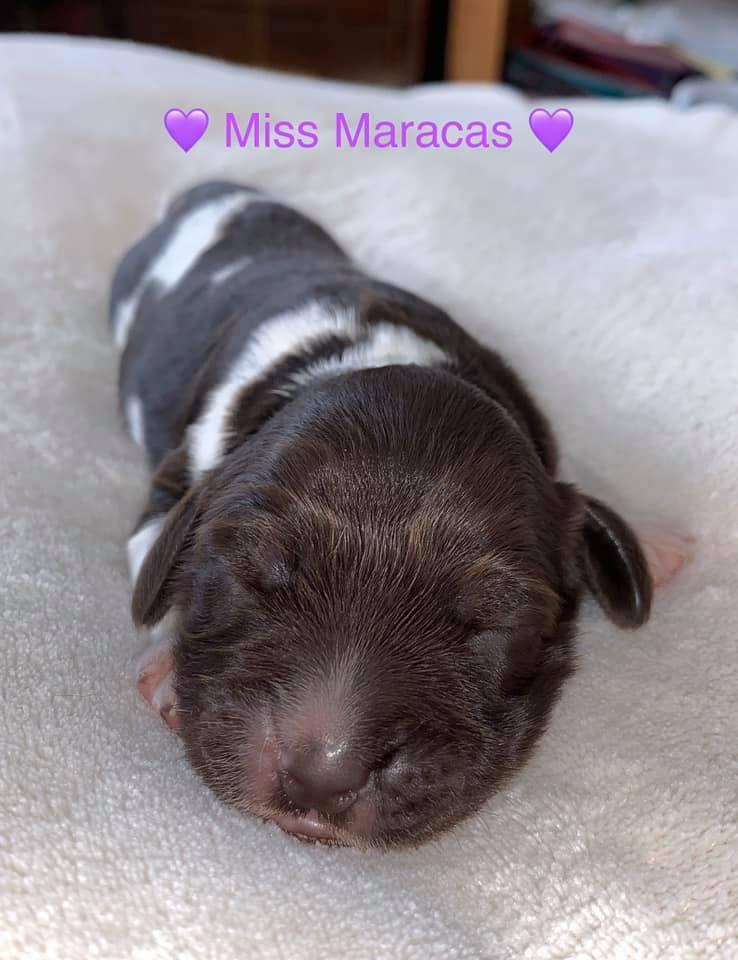 Miss Maracas