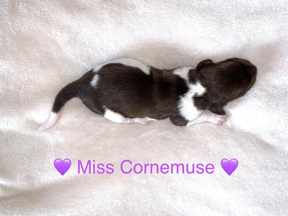 MissCornemuse
