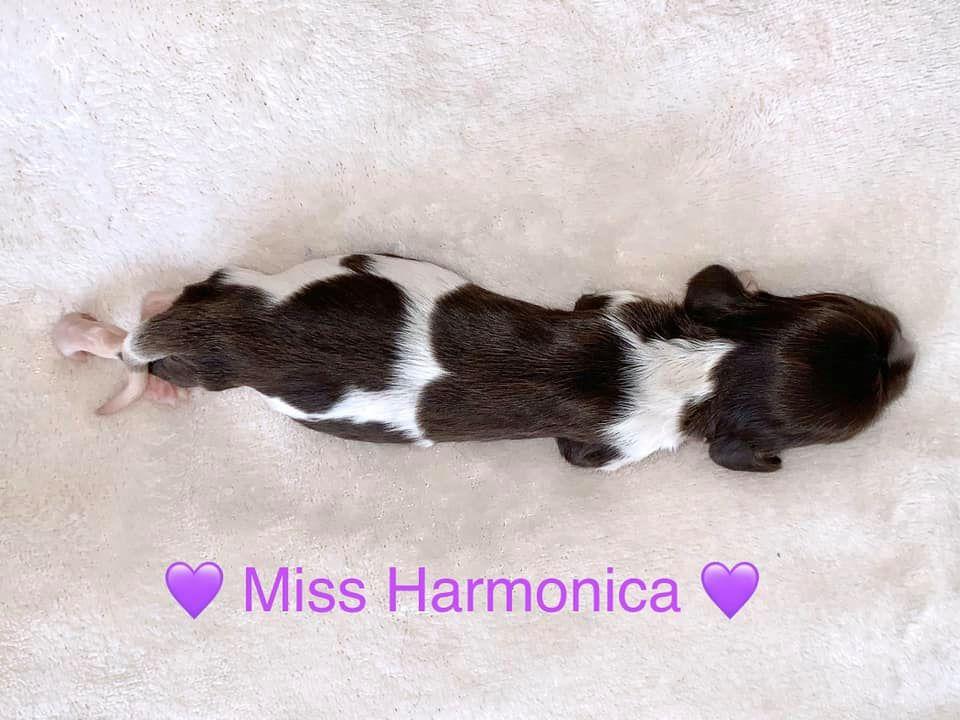 MissHarmonica