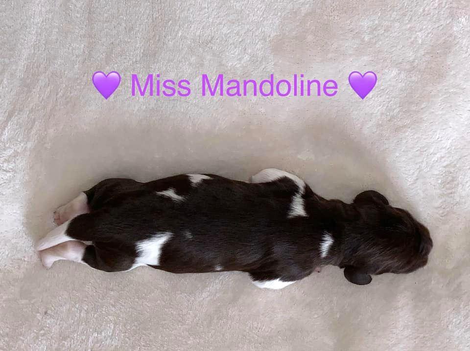 MissMandoline