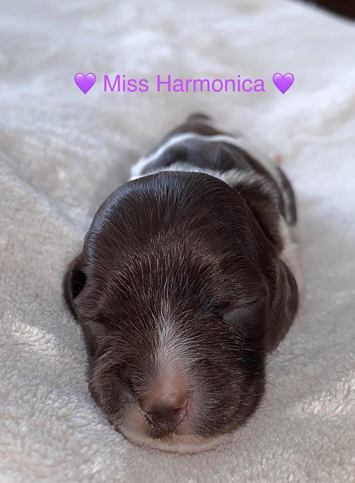 Miss Harmonica