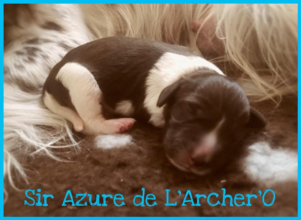 Sir Azure de L'Archer'O