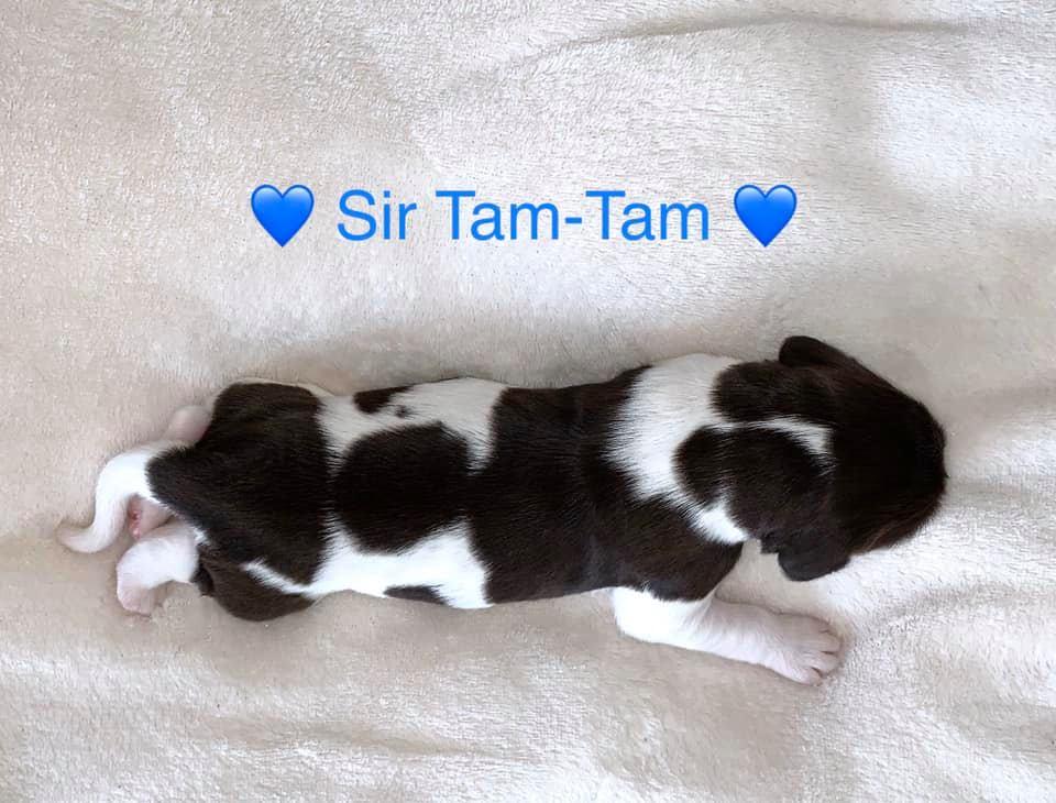 SirTam-Tam
