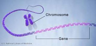 Tests génétiques.. mais encore?