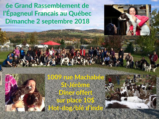 6e Grand Rassemblement de l'Épagneul Français - GREFAQ