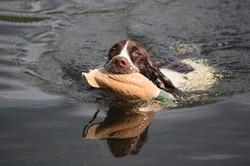 Roméo au rapport à l'eau