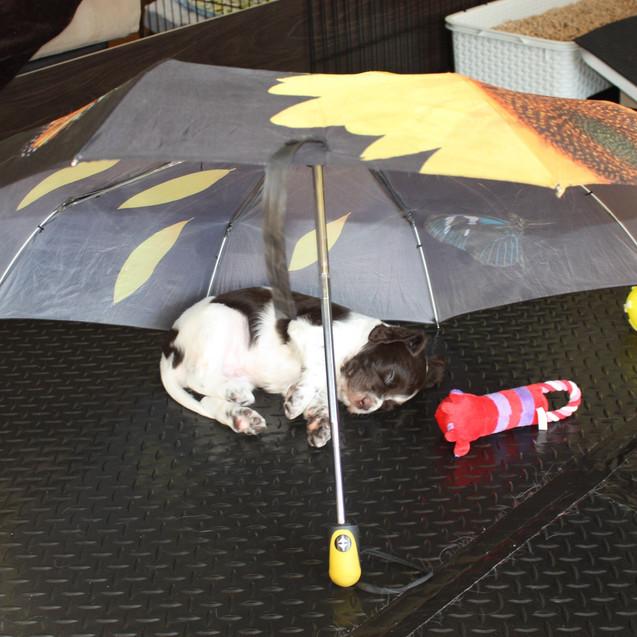 Repos sous l'ombrelle