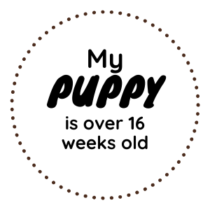 Over 16 weeks old.png