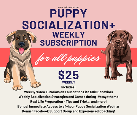 Puppy Socialization Weekly Subscription