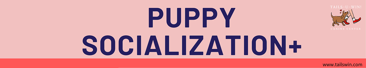 Puppy socialization+ weekly subscription