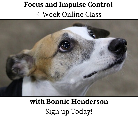 Focus and Impulse Control 4-Week Class O