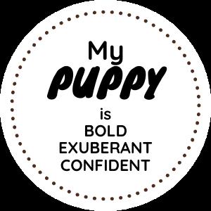 Bold Exuberant Confident.png