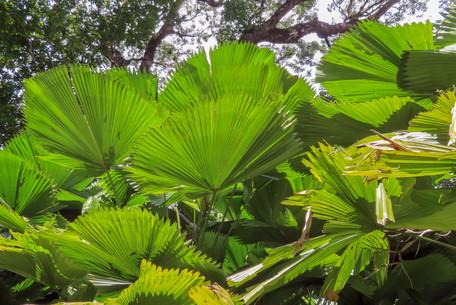 reusachtige palmbladeren