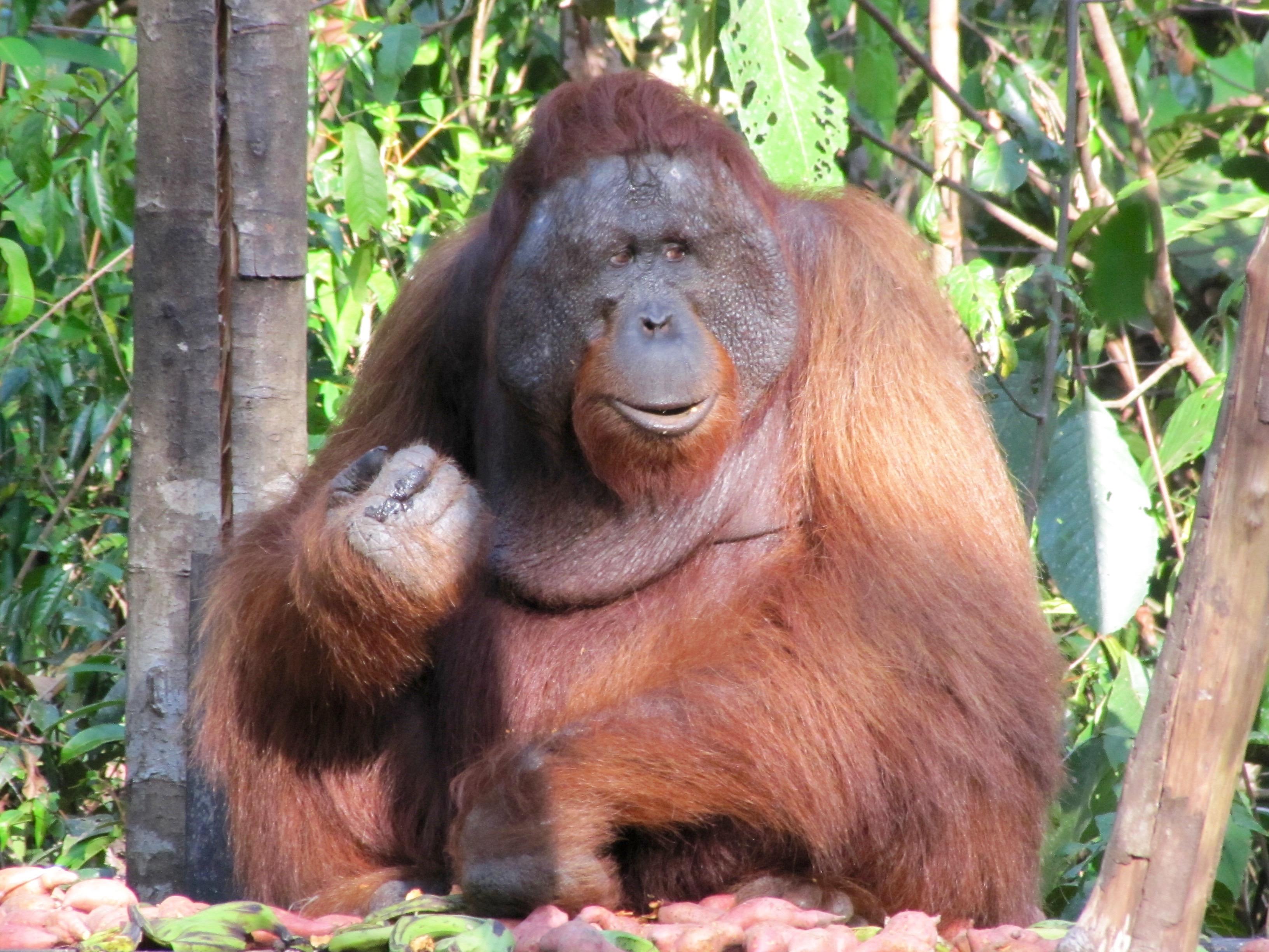 Kalimantan (september)