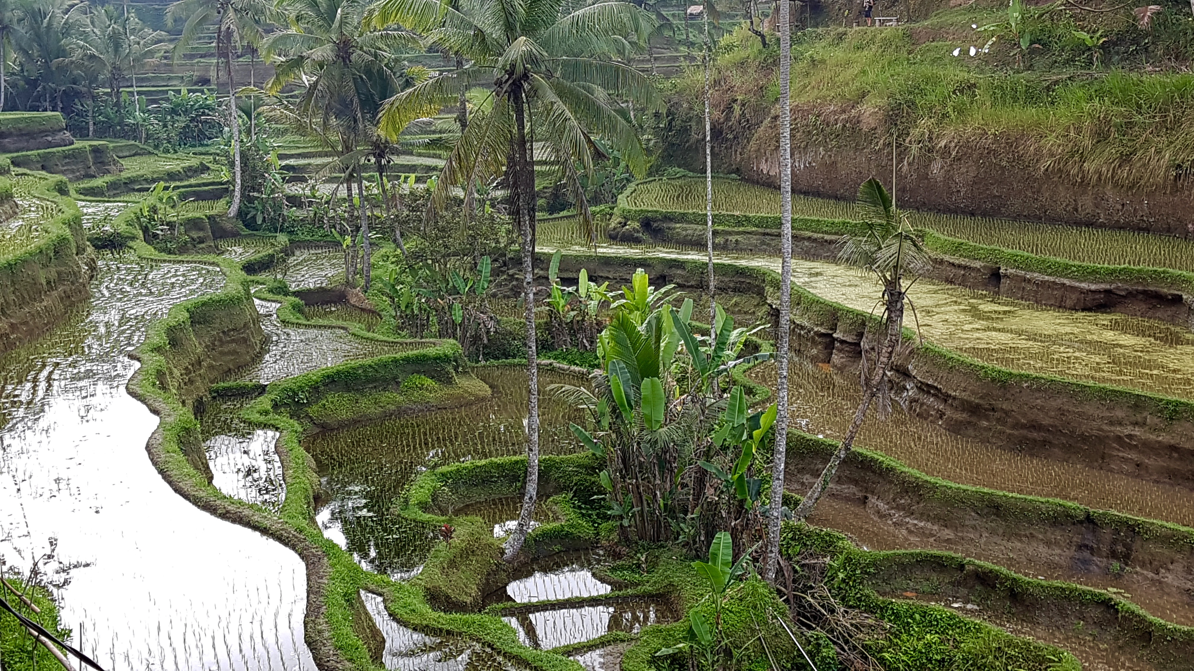 Indonesia (augustus - september)