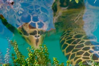af en toe komt er een schildpad een kijkje nemen bij ons