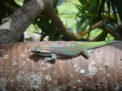 23rd. Gecko eggs 047