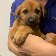 Community Animal Clinic SPCA July 2019
