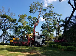 修樹鋸樹工程