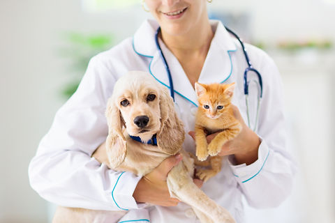Vet examining dog and cat. Puppy and kit
