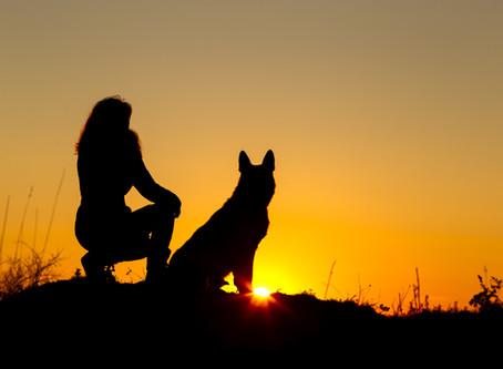 DOG BITE PREVENTION (Part One)