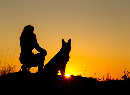 LOST DOG PREVENTION AND RECOVERY - Part Three