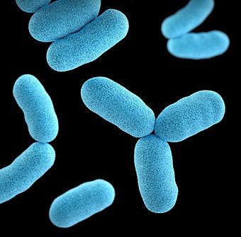 implantacao microbiota probioticos recta