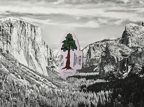 Sequoia Tree Small Sticker