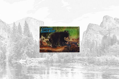 3D California Black Bear Magnet