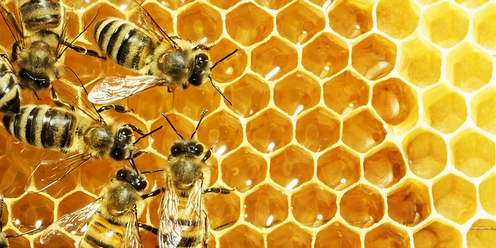 Society Talk - The Art of Ethical Beekeeping by Murray Rixon