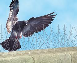 images bird