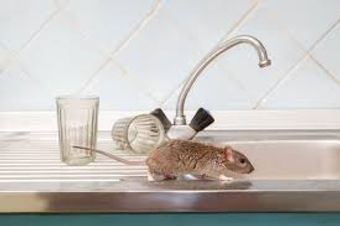 Antrim Rat.jpg