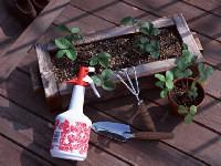 園芸セラピー