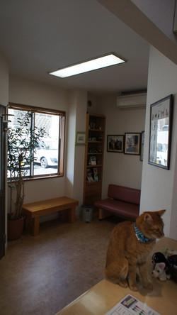 猫の待合室