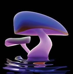 Mushroom_Logo_Pic