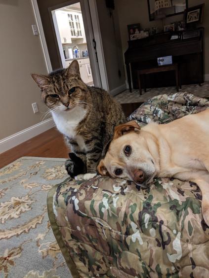 Tigra and Rocky
