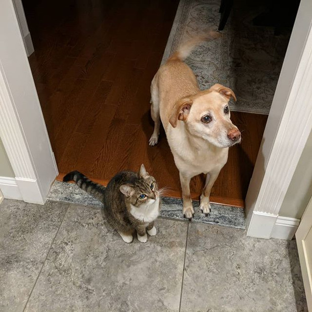 Tigra and Rocky waiting for treats in the kitchen