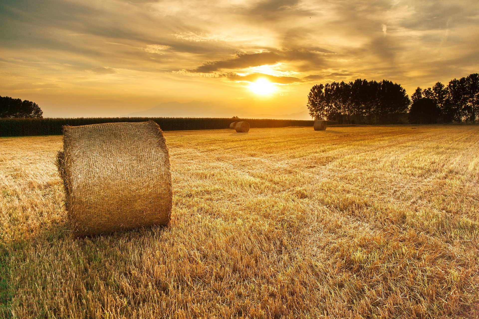 Hay field photo