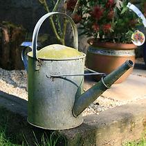 The Chichester Gardener. Gardener in Chichester. Horticulture Therapy in Chichester West Sussex