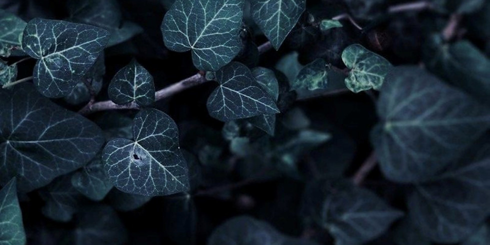 Shamanic Journey with the Plants: Ivy