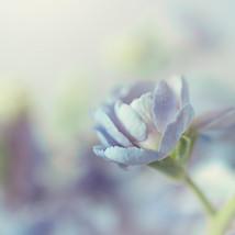 BlueShabbyChicFlowers_YDL_4538-SQ.jpg