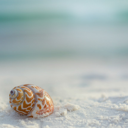 LSR_seashell_web samples-16.jpg