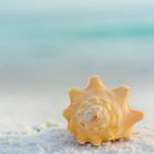LSR_seashell_web samples-14.jpg