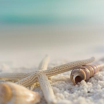 LSR_seashell_web samples-18.jpg