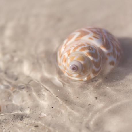 LSR_seashell_web samples-10.jpg