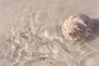 LSR_seashell_web samples-9.jpg